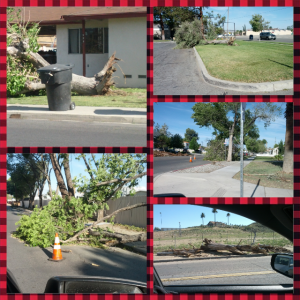 Random broken trees all over the place